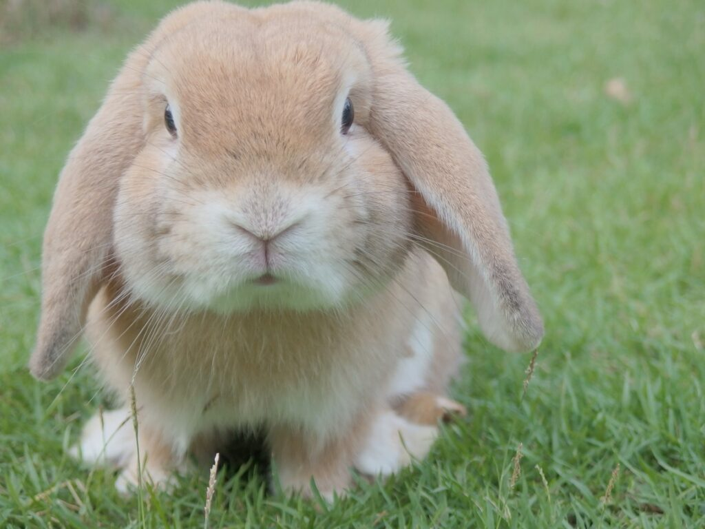 5 Rabbits To Make for an Unconventional Easter Sunday